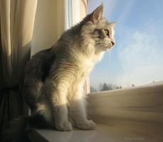 Sunny cat by Findhoem