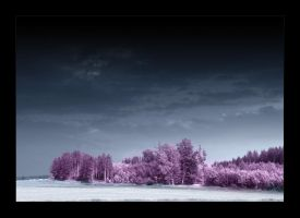 purple by ssilence