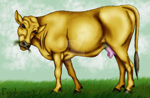 grazing cow by pookyhorse
