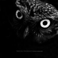 : Owl : by sabbbriCA