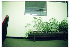Corridors and Pot Plants 01 by gurrilla