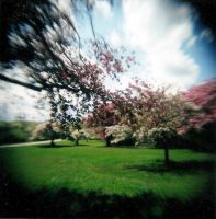 Sun Drenched Park by Lomo440
