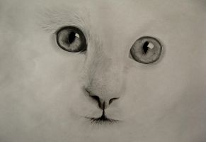 Cat Drawing by Rate19