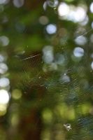 Spiderweb by Arctictouch