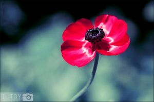Remember by ILTBY