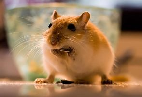 hungry gerbil 2 by msun