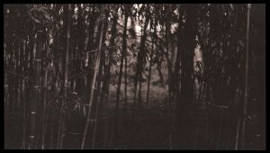 Bamboo Forest by Smooth-as-Sandpaper