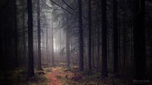 Deep in forest by m-eralp