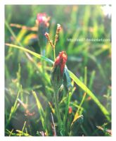 small flower by ine87
