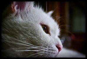 My brother cat by kenpunk79