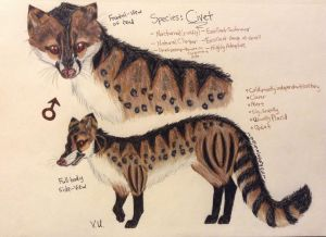 Civet|Design|Contest Entry|Now my oc by animalover4six