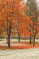 Herbst08 by Anschi71