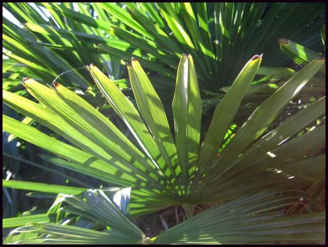 Palm Leaves by sheselectric