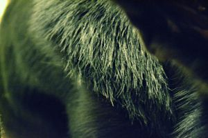 black fur. a little try with the focus. by DaydreamingShadow