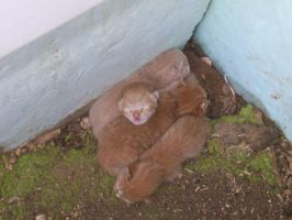 Kittenses 10 by Empy-Stock