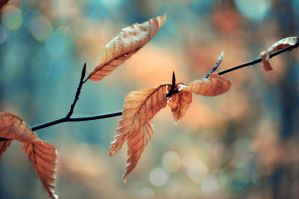 Old leaves - new hope by Schattenfunke