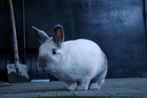 Ancord the rabbit 15 by Panopticon-Stock