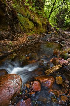 Back to Parfrey's Glen 2 by leavenotrase