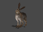 THE WITCHER 3 - HARE by Oo-FiL-oO