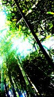 Bamboo in a different light by Chimeraguardian