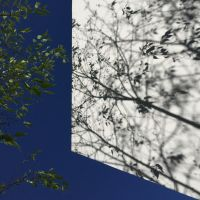 geometrees by m-lucia