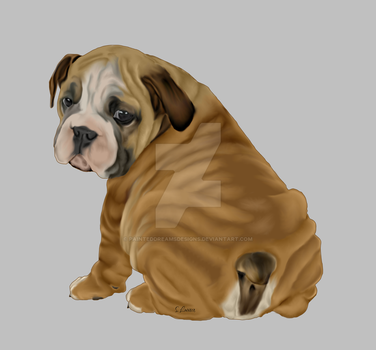 Bulldog Puppy by painteddreamsdesigns