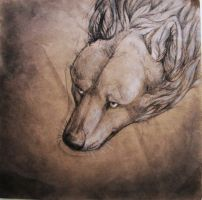 I keep the wolf from the door by Thylazine