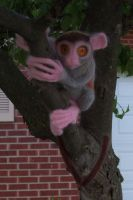 Needlefelt Tarsier I by shadechristiwolven