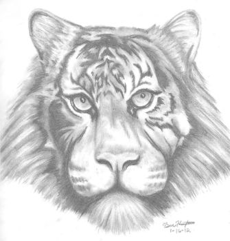 Tiger Sketch by DmierMortus
