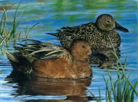 Federal Duck Stamp Entry by Annartistry