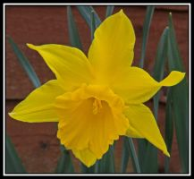 Narcissus by lizzyr