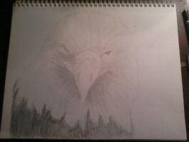 Eagle by SaraMichellee