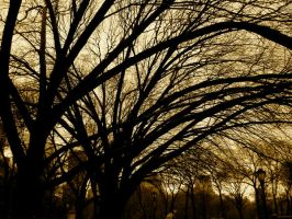 Trees II by clarissa11