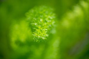 Fuzzy Leaves by PrimalClone