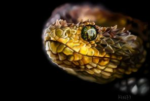 Bush Viper by KahlaWolf
