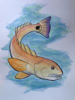 Redfish Watercolor by visiblespectre