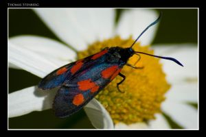 Insect... by tomba76