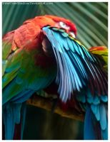 Red and Green Macaw 002 by ShineOverShadow