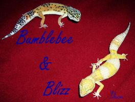 Bumblebee and Blizz by Zhon