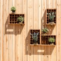 wall plants by stachelpferdchen