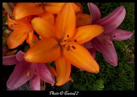 Flower 40 by Twins72