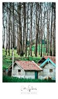 Bromo Hunt - trees and house by jan2710