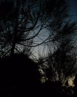 Venus Through the Pines II by copperphoenix