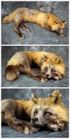 Cross Fox Soft Mount (1) by WeirdCityTaxidermy