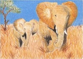 Day 25: African Elephants ACEO by whitetippedwaves
