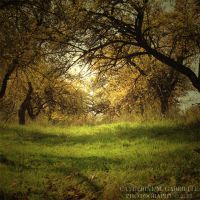 Golden orchard by firepaved