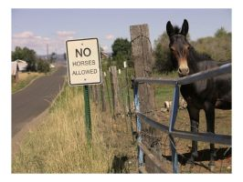 No Horses Allowed. by er0k