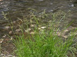 Grass on Bank 3 by Retoucher07030