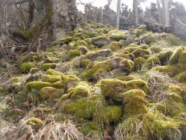 Mossy Forest Ground Stock 2 by Meta-Stock