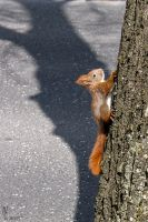 2015-04 baby squirrel 2 by evionn